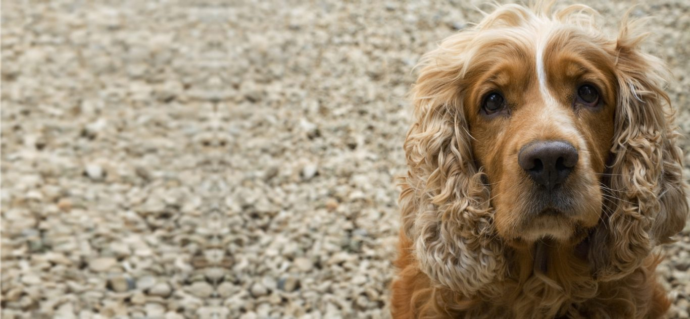 Perfect Paws Spaniel Dog Groomers